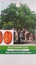 KIOWA PAPERSHELL PECAN TREE Shade Trees Live Healthy Plant Large Pecans Nuts NOW