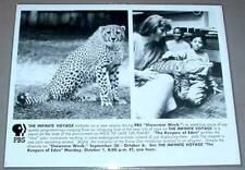 Cheetah / Bronx Zoo Alligator - Pbs Tv Promo Photo