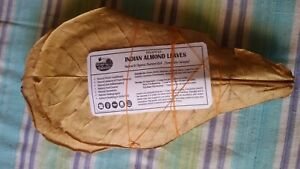 Indian Almond Leaves/Catappa from INDIA | 100% Naturally Aged & Sun Dried