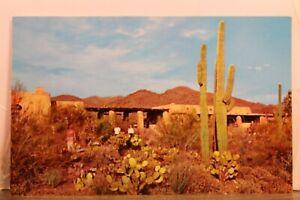 Arizona AZ Sonora Desert Museum Mountain Park Postcard Old Vintage Card View PC