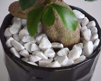 CARRARA Decorative Natural Stones Pebbles  SNOW WHITE *** HOME & GARDEN ***