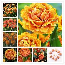 True Orange Tulip Bulbs Not Tulip Seeds Symbolizes Love - 5 Bulbs Home Garden