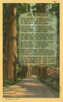 Linen Postcard CA L042 Cancel 1948 The Redwoods Poem Poetry Joseph Strauss