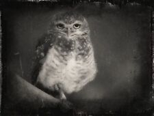 """Create Approx: *4.50""""x 5.50"""" Half-Plate Tintype From Your favorite  Photograph"""