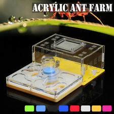 ANT  LIVE FORMICARIUM ANT WORKERS COLONY NEST CASTLE INSECT FEED FEET