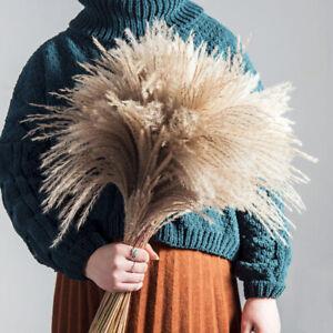 50/100Pcs Natural Dried Pampas Grass Reed Home Wedding Flower Bunch Phragmites-