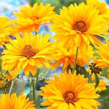 SUMMER SUN - Heliopsis scabra - 100 seeds - Perennial flower