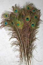 Peacock Feathers Natural Standard 35-40 inch length per 25
