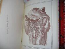 """""""Manuel d'Anatomie Descriptive du Corps Humain"""" CLOQUET Ed. Pariente 5vol 1998"""