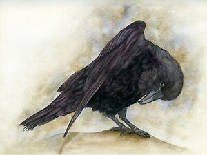 Raven Corvid Wild Bird,  Wildlife print from an Original Watercolour Painting
