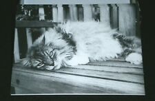NEW! 8 CARDS ~ THE CONTENTED CAT Blank NOTE Cards w/ PHOTOGRAPHY by Kim Levin