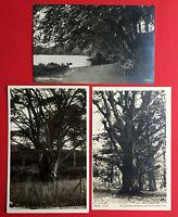 3 x Foto AK Ostsee Insel VILM und RÜGEN um 1930 Herthasee, Buche  ( 15104