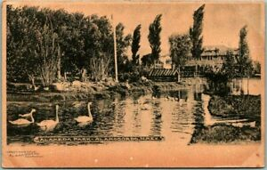 ALAMOGORDO, New Mexico Postcard Alameda PARK Lake / Swans Scene c1900s Albertype