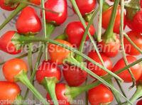 🔥 🌶️ TEPIN Chili Birdpepper Wildform 10 frische Samen Balkon Kübel