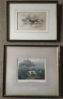 Antique Hand Colored Engravings The Springer Partridge Shooting Hunting Dogs