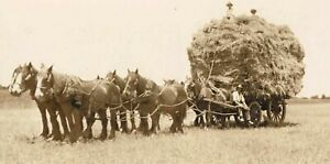 WESTERN AUSTRALIA 2 original 1920s photos of wheat farming in BROOKTON district