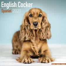 ENGLISH COCKER SPANIEL CALENDAR 2021 SQUARE WALL ( 30cm x 30cm ) NEW  SEALED