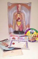 Human Torso Science Set - 3D Model School Education Biology NEW