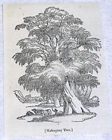 1832 small magazine engraving ~ MAHOGANY TREE with animals underneath