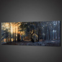 SUNRAYS MISTY FOREST PANORAMIC CANVAS PRINT PICTURE WALL ART VARIETY OF SIZES
