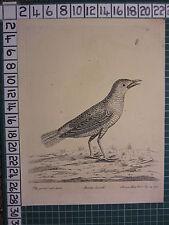 1736 DATED PRINT THE GREATER RED START ~ ANTIQUE BIRD PRINT ELEAZER ALBIN ~
