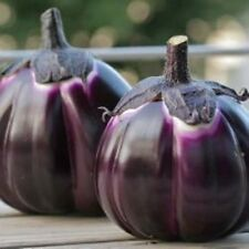 Italian Eggplant  - VIOLETTA DI FIRENZE - 30 Heirloom Vegetable Aubergine Seeds