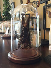 Hanging Bat In a Glass Dome, Oddities, Obsure, Macabre, Gothic