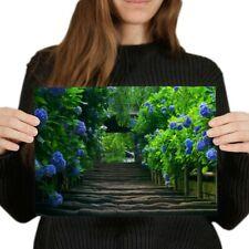 A4 - Hydrangea Flowers Garden Poster 29.7X21cm280gsm #8970