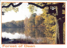 Gloucestershire: Forest of Dean, Cannop Ponds - Posted 1996