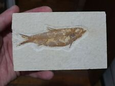 More details for fish fossil. big knightia alta wyoming