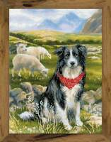 Stickpackung Stickbild sticken 30x40 cm Border Collie Hütehund Hund Schafe Natur