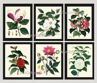 Unframed Botanical Print Set of 6 Antique Magnolia Tree Flowers Home Decor Art