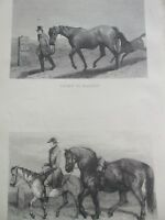 ANTIQUE PRINT C1800'S ENGRAVING GOING TO MARKET TRAVELLING CART STALLION HORSES