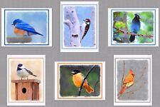 6 Assorted Wild Bird Blank Note Greeting Cards Bluebird Oriole Cardinal Junco