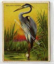 (Ga1820-454) American Tob Co., T29 Animals, Goliath Heron 1909 G-VG