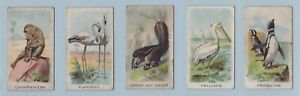 Cigarette Cards - Animals and Birds (W.D. & H.O. Wills Ltd) - 5 Cards