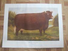 Ross Butler Cow Print Beef Shorthorn Standard Type Canadian Breeders Farm Animal