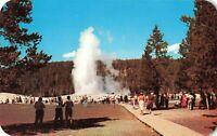 Postcard Old Faithful Geyser Yellowstone National Park Wyoming