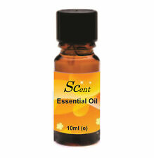Cinnamon Essential Oil 10ml Packs of 1,3 & 5 For Aromatherapy & Home Fragrance
