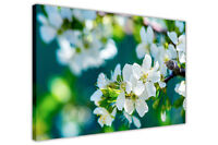 WHITE BLOSSOM SPRING FLOWERS FRAMED PRINTS CANVAS WALL ART PICTURES FLORAL PHOTO