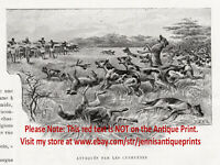 African Wild Dog Painted Cape Hunting, Dogs Hunted, 1902 Antique Print & Article