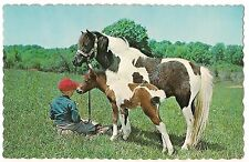 MUTUAL AFFECTION Boy Paint HORSE & Colt Foal Chatham Ontario Canada Postcard