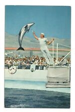 Porpoise Marineland Of The Pacific California Vintage Postcard AN28