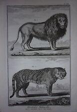 GRAVURE ORIGINALE SUR CUIVRE  MARTINET 1768 HISTOIRE NATURELLE LE LION LE TIGRE