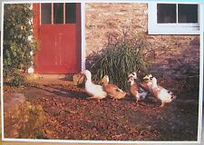Irish Postcard Ducks FOLLOW THE LEADER JC McKechnie Ireland People & Places