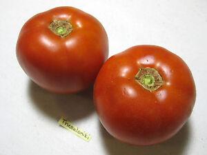 Organic Thessaloniki Tomato Seeds- Heat Resistant