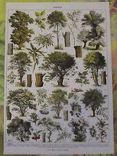 Ancienne Gravure Larousse 1950 Art Print on Original Antique Book Page Sumac