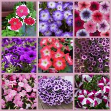 100Pcs Petunia Flower Seeds 10 Kinds Home Garden Wonderful Fragrant Plants
