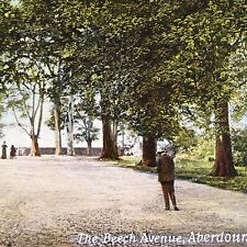 Antique Aberdour Scotland Postcard Beech Avenue Unused Printed in Germany Colour