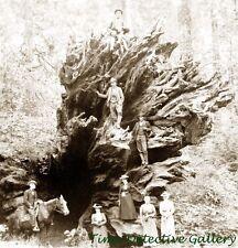 """Group at """"Eagle's Wing"""" Calaveras Big Trees, CA - 1902 - Historic Photo Print"""